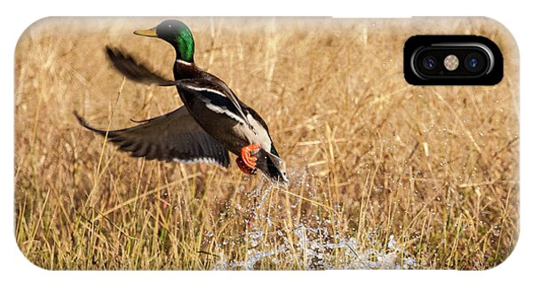 IPhone Case featuring the photograph Mallard Explosion by Jeff Phillippi