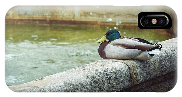 Mallard Resting On The Fountain Of The Fallen Angel In The Retiro Park - Madrid, Spain IPhone Case