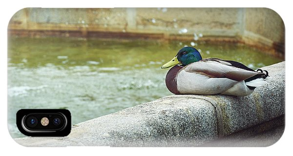 Mallard Resting On The Fountain Of The Fallen Angel In The Retiro Park - Madrid, Spain IPhone Case