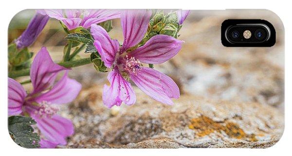 Malva Sylvestris - Spontaneous Flower Of The Tuscan Mountains IPhone Case