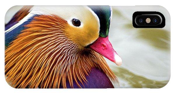 Mandarin Duck Portrait IPhone Case