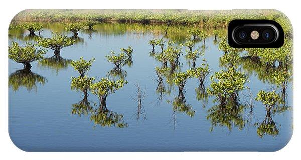 Mangrove Nursery IPhone Case