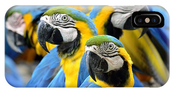 Many Of Blue And Gold Macaw Perching Phone Case by Super Prin
