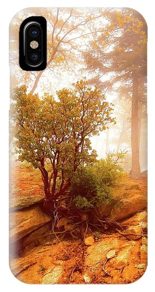 Manzanita In Light IPhone Case