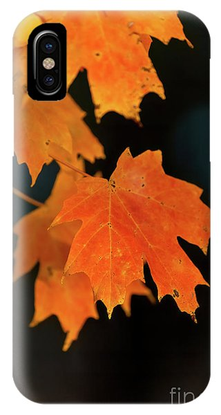 Maple-1 IPhone Case