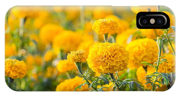 Botanical Garden iPhone Case - Marigold Flower ,marigold Flower In The by Suthiphong Yina