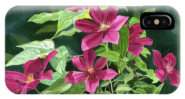 Dark Violet iPhone Case - Maroon Colored Clematis Flowers Dark Background by Sharon Freeman
