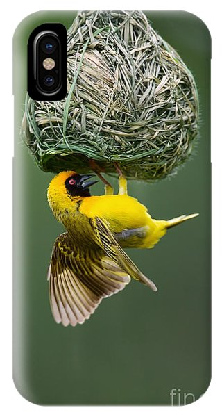 Small iPhone Case - Masked Weaver Ploceus Velatus Hanging by Johan Swanepoel