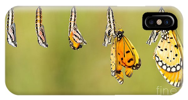 Chrysalis iPhone Case - Mature Cocoon Transform To Tawny Coster by Mathisa