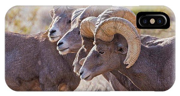 Rocky Mountain Bighorn Sheep iPhone Case - Meeting Of The Horns by Jurgen Lorenzen