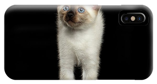 Cute Kitten iPhone Case - Mekong Bobtail Kitty With Blue Eyes On Isolated Black Background by Sergey Taran