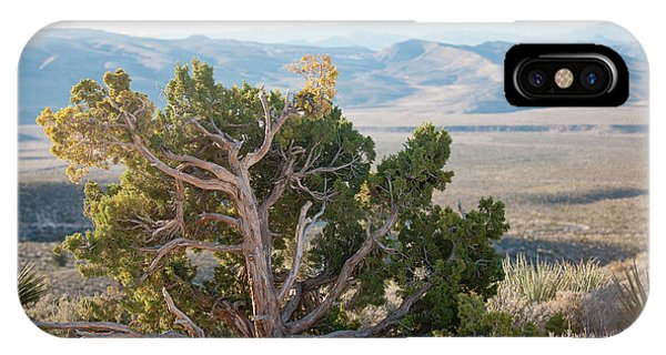 Mesquite In Nevada Desert IPhone Case