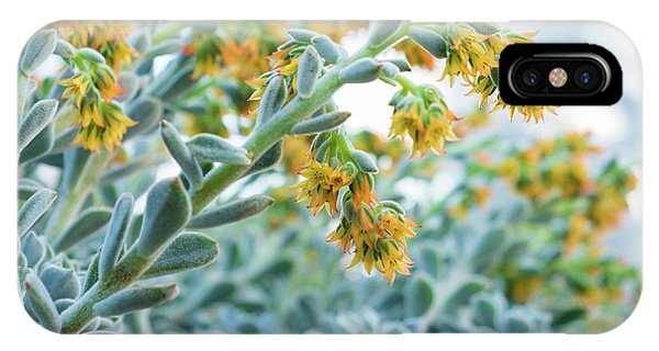 Mexican Echeveria In The  Morning IPhone Case