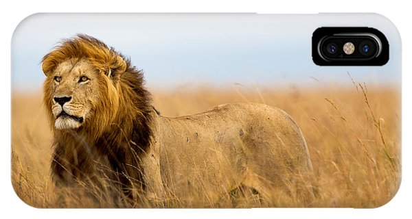 East Africa iPhone Case - Mighty Lion Watching The Lionesses Who by Maggy Meyer