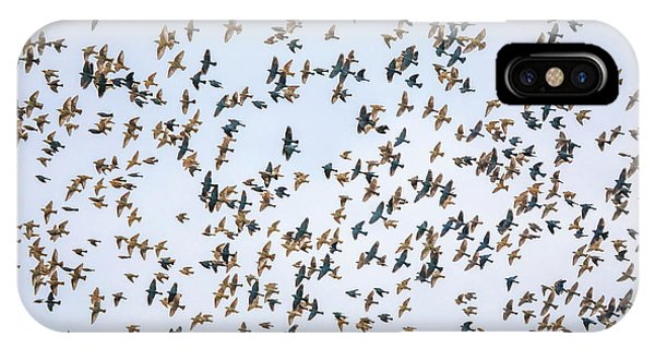 IPhone Case featuring the photograph Migrations by Dan Sproul