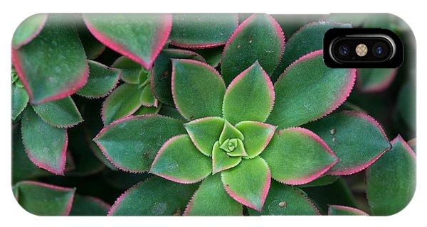 Botanical Garden iPhone Case - Miniature Succulent Plants by Asharkyu