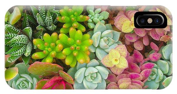 Botanical Garden iPhone Case - Miniature Succulent Plants by Dinodentist