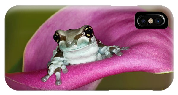 Mission Golden-eyed Tree Frog Or Milk Phone Case by Adam Jones
