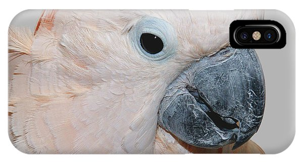 Moluccan Cockatoo IPhone Case