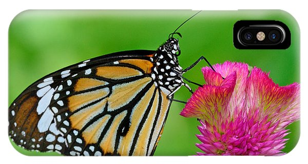 Serenity iPhone Case - Monarch Butterfly by Boonchuay Promjiam