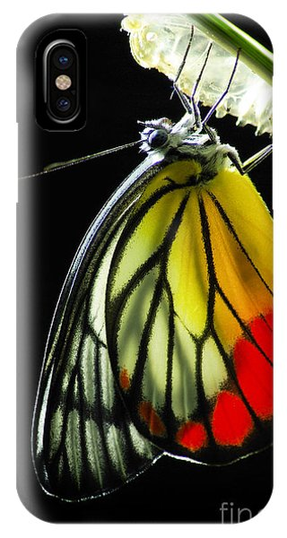 Chrysalis iPhone Case - Monarch Butterfly, Milkweed Mania, Baby by 10 Face