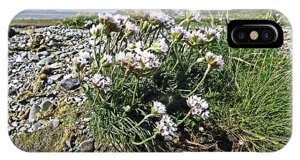 Morecambe. Hest Bank. Sea Thrift. IPhone Case