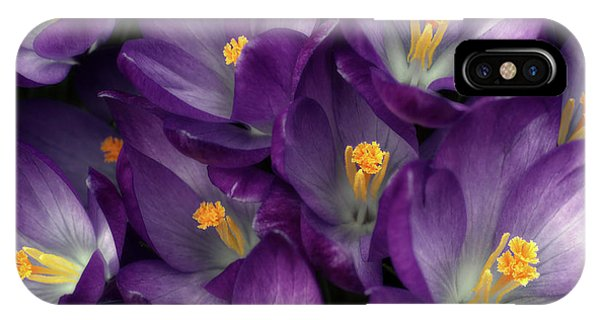 Morning Crocus IPhone Case