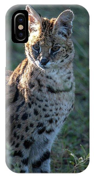Morning Lit Serval Cat IPhone Case