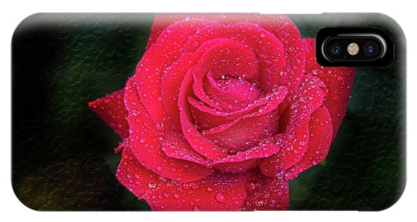 Morning Mist On Red Rose IPhone Case