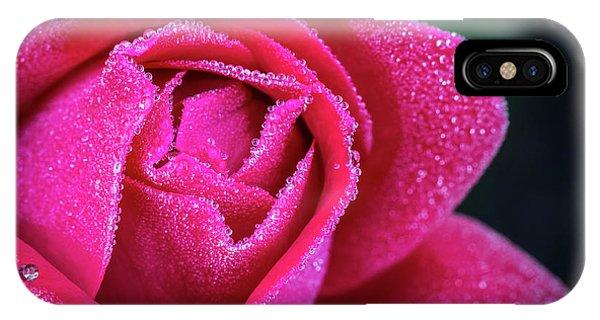 Morning Rose IPhone Case