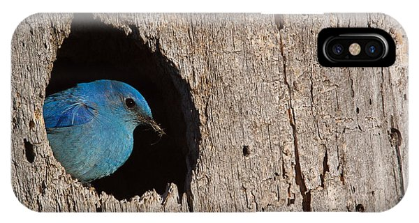 Eggs iPhone Case - Mountain Bluebird, Sialia Currucoides by Tom Reichner