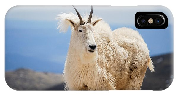 Mountain Goat IPhone Case