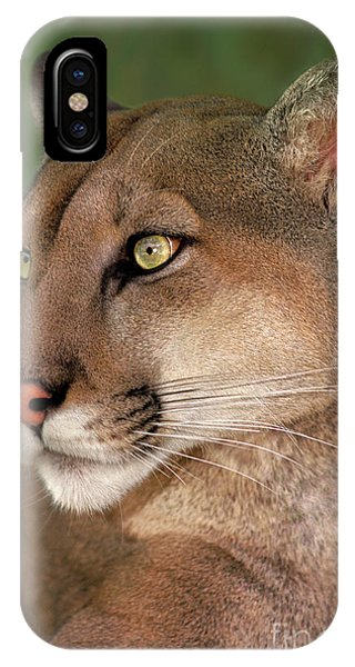 IPhone Case featuring the photograph Mountain Lion Portrait Wildlife Rescue by Dave Welling