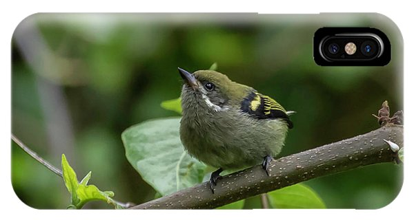 IPhone Case featuring the photograph Moustached Tinkerbird by Thomas Kallmeyer