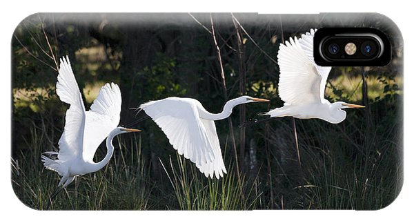 Trio iPhone Case - Multiple Exposures Of Large White Bird by David Alexander Stein
