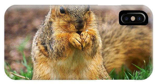 Munching Cute Fox Squirrel IPhone Case