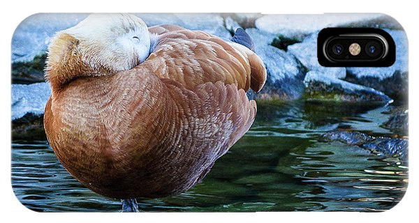 Napping At The Pond IPhone Case
