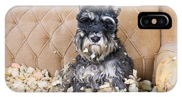 Purebred iPhone Case - Naughty Bad Schnauzer Puppy Dog Sitting by Maximilian100