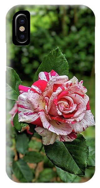 Neil Diamond Rose IPhone Case