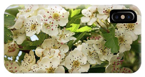 Neston.  Hawthorn Blossom. IPhone Case