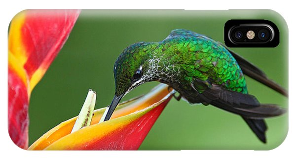 Eating iPhone Case - Nice Hummingbird Green-crowned by Ondrej Prosicky