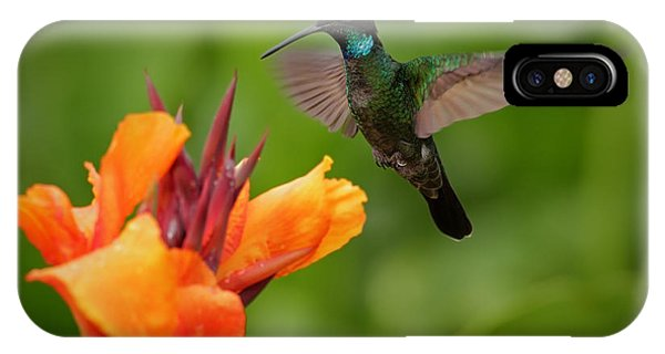 Small iPhone Case - Nice Hummingbird, Magnificent by Ondrej Prosicky