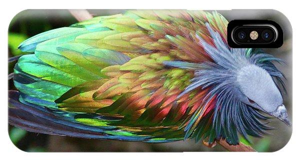 Nicobar Pigeon IPhone Case