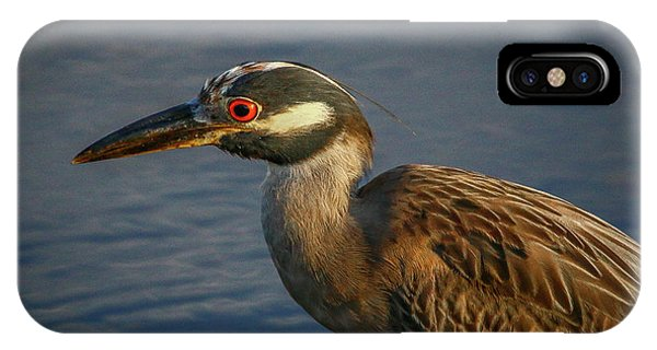 Night Heron Portrait IPhone Case