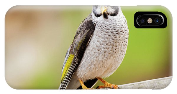 Noisy Miner IPhone Case