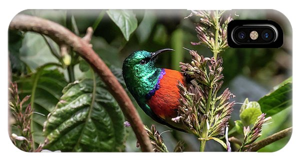 IPhone Case featuring the photograph Northern Double-collared Sunbird by Thomas Kallmeyer