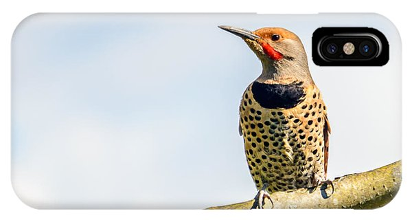 Northern Flicker iPhone Case - Northern Flicker, Colaptes Auratus by Karamysh