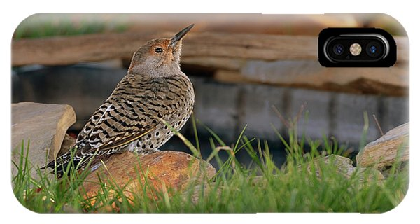 Northern Flicker iPhone Case - Northern Flicker by Gary Langley