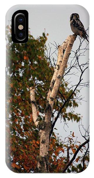 Northern Hawk Owl 101402 IPhone Case