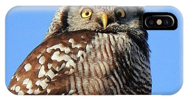 Northern Hawk-owl IPhone Case